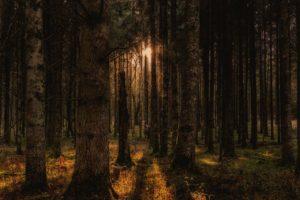 Forest Trees Landscape Autumn  - flo222 / Pixabay